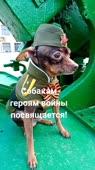 Собака.mp4
