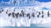 penguins.webm