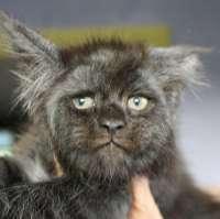human cat.jpg