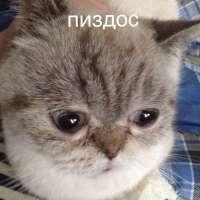 15330962365830-dvach-cg-1341709.jpg