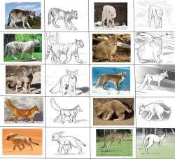 Wild Animals.jpg