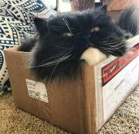 котэ-коробка-5882061.jpeg