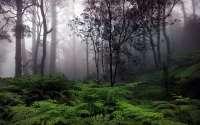 Forest-Rain.jpg