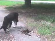 Собака ест говно 2.mp4
