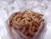 worms.webm