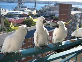 parrotпопугай-5887596.jpeg