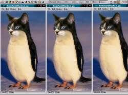Black-Cat-Linux.png