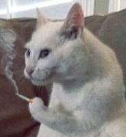 Cat cigarette.jpg