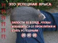 uspeshnaya krysa521.jpg