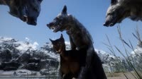 wolf.webm