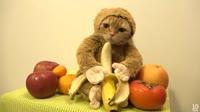 кот банан.webm