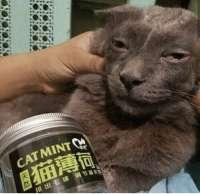 cat-mint.png