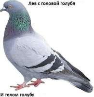 Лев-с-головой-голубя1.jpg