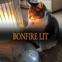 lit bonfire cat.jpg